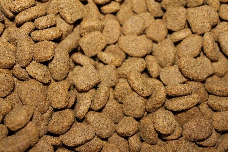 droog voer brokken voor honden