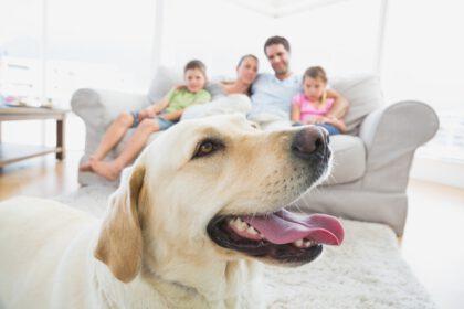 Familie met een Labrador