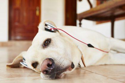 gadgets om je Labrador