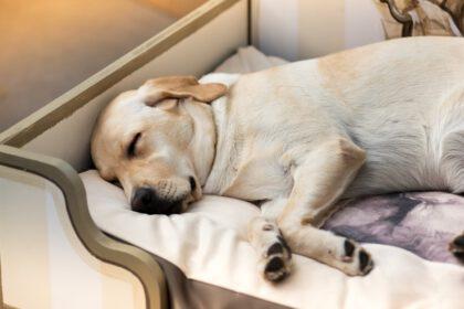 beste hondenmand voor labrador