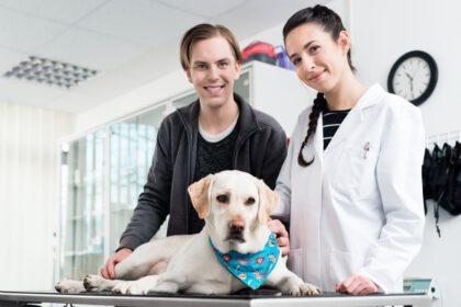 Voordelen, nadelen en prijs van Castratie Labrador Reu