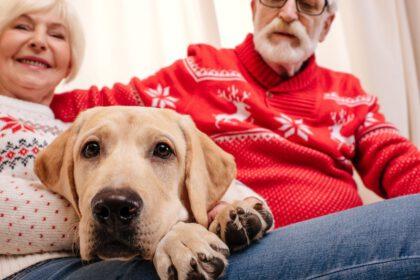 zijn labradors geschikt voor ouderen