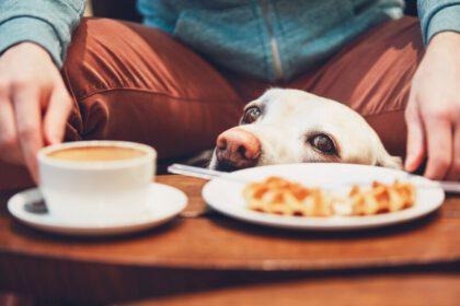Waarom bedelt mijn Labrador retriever en wat kan ik eraan doen