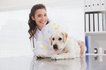 Labrador teef sterilisatie