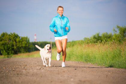 Labrador lopen en rennen